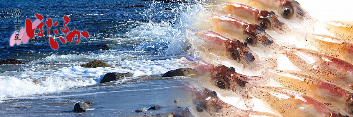 富山湾ホタルイカお取り寄せ スライダー